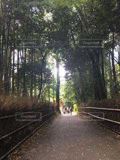 京都,観光,外,竹,有名