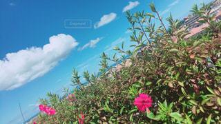 空,緑,植物,赤,青,ハイビスカス,沖縄,観光,旅行