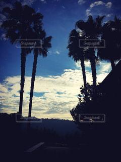 風景,空,夏,アメリカ,観光,ヤシの木,留学
