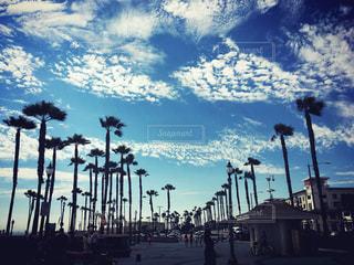 風景,空,夏,ビーチ,アメリカ,観光,ヤシの木,留学