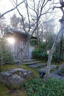 空,冬,庭,屋外,太陽,階段,光,樹木,庭園,石畳,門,石,草木