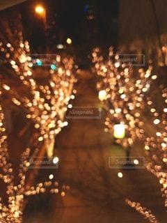 冬,夜,夜景,大阪,イルミネーション,キラキラ,並木,明るい,アンバサダー,グランフロント大阪,シャンパンゴールド,代名詞