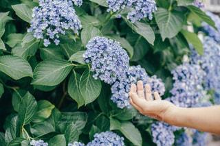 花の写真・画像素材[575760]