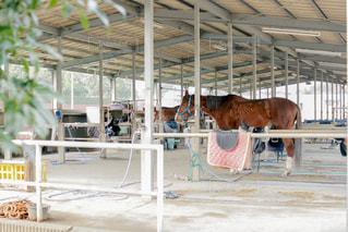 近くの建物の隣に馬をの写真・画像素材[1003749]