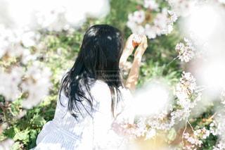 近くの花のアップの写真・画像素材[1369004]