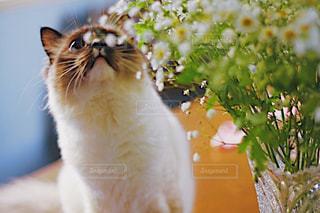 猫のクローズアップの写真・画像素材[2312253]