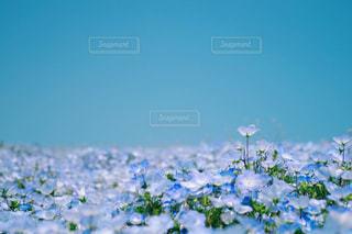 近くの花のアップ - No.1034943