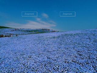 青の世界💙の写真・画像素材[1034949]