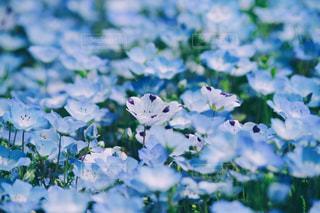 青の絶景!の写真・画像素材[1131433]