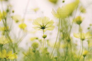 近くの花のアップの写真・画像素材[1131449]