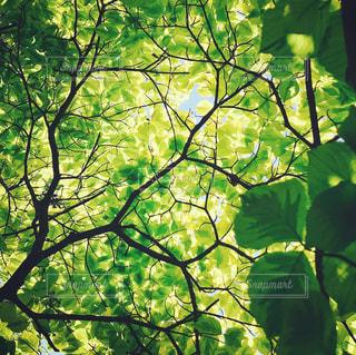 近くの木のアップの写真・画像素材[1178662]