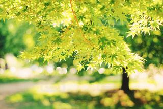 近くの木のアップの写真・画像素材[1179497]