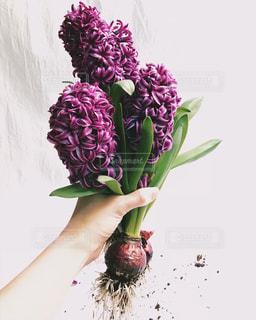 紫色の花一杯の花瓶の写真・画像素材[1371389]