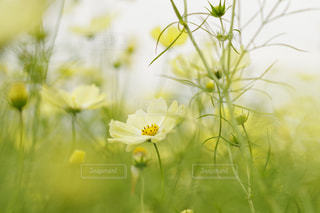 近くの花のアップの写真・画像素材[1483248]