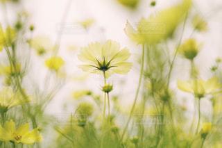 近くの花のアップの写真・画像素材[1483289]