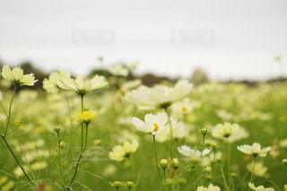 近くの花のアップの写真・画像素材[1483310]