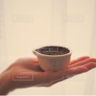 バジルの新芽を包みこむ手の写真・画像素材[1871261]