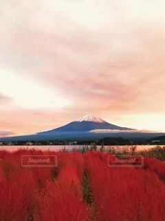 秋色の富士山の写真・画像素材[4097364]