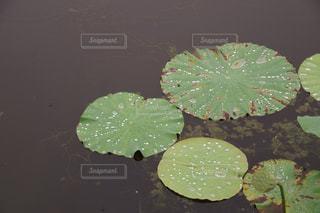 雨の写真・画像素材[575029]