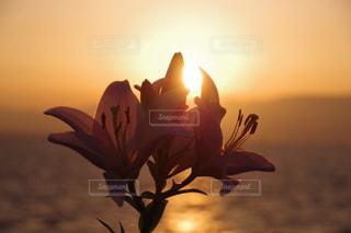 女性,空,花,夕日,夕焼け,夕暮れ,写真,黄昏,夕陽,flower,ゆり,百合,可憐