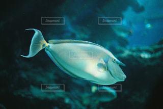 水面下を泳ぐ魚たちの写真・画像素材[1315186]