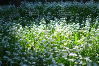 花園の写真・画像素材[2264508]