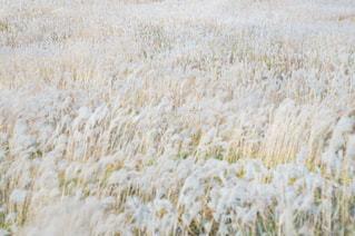近くに乾いた草のフィールドのの写真・画像素材[869485]