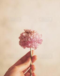 花を持っている手の写真・画像素材[1213659]