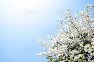 近くの木のアップ - No.1099193