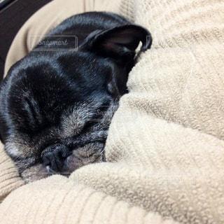 ベッドの上で寝ている黒犬の写真・画像素材[982293]