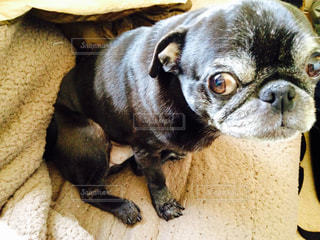 地面に横たわっている茶色と黒犬の写真・画像素材[982299]