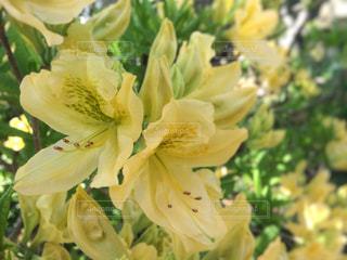 花の写真・画像素材[605286]