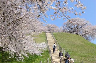 春,桜,青空,丘,埼玉,花絶景,さきたま古墳公園
