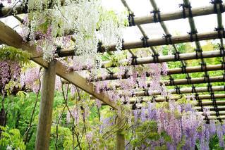 フェンスの横にあるツリーの写真・画像素材[1264370]