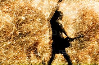 草の中の花火の写真・画像素材[795524]