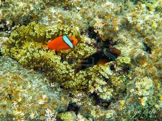 カラフルな魚の写真・画像素材[1388854]