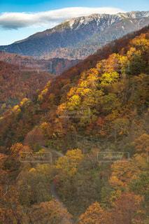 虹色の紅葉の写真・画像素材[1607110]