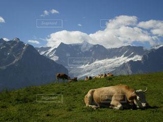 癒されるスイス的風景の写真・画像素材[791514]