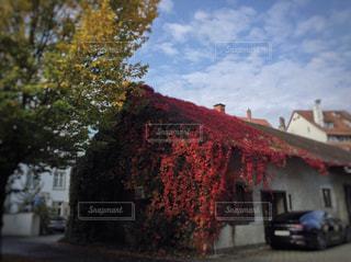 ステキな紅葉♡の写真・画像素材[792185]