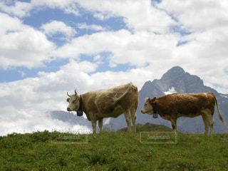 空,海外,雲,山,旅,スイス,ハイキング,海外旅行,うし,ウシ,そら