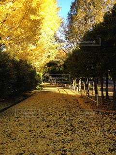 秋の写真・画像素材[599323]