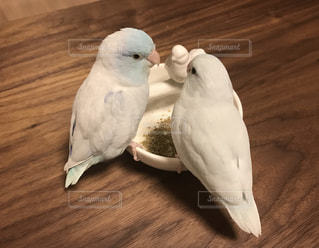 仲良く(?)お食事中の写真・画像素材[722448]