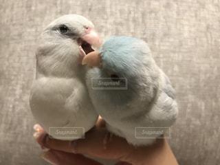 近くに鳥のアップの写真・画像素材[722449]