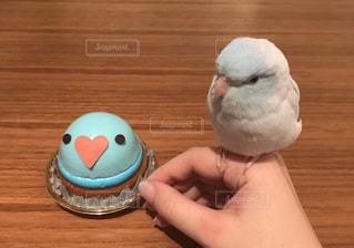 小鳥のケーキの写真・画像素材[807354]