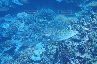 ウミガメに遭遇の写真・画像素材[809710]