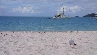 ホワイトヘブンビーチの写真・画像素材[830727]