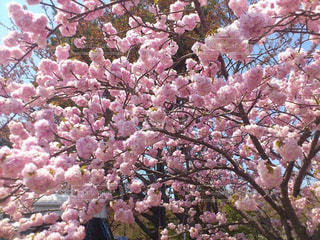 近くの花のアップの写真・画像素材[842390]
