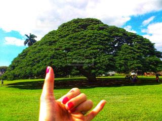 バック グラウンドでモアナルア ・ ガーデンと緑豊かな緑のフィールドに立っている人の写真・画像素材[1027802]