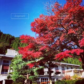 家の前に木の写真・画像素材[864230]