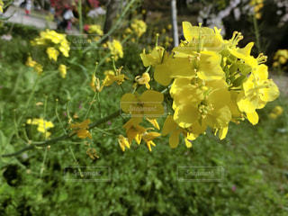 花の写真・画像素材[595400]